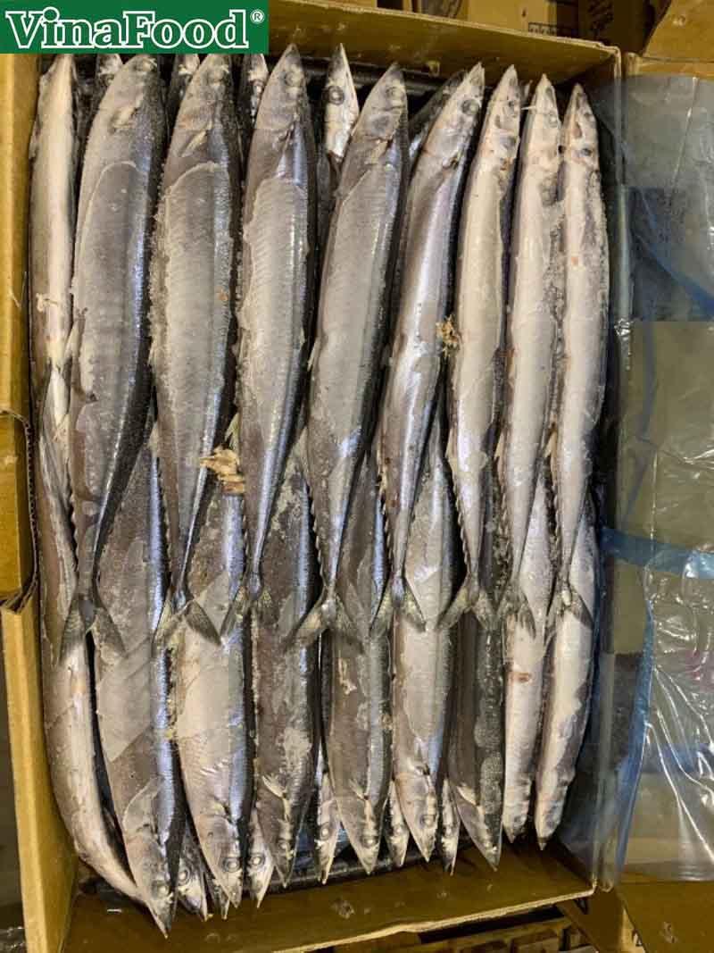 Cá Thu Nhật Lợi Ích Sức Khỏe