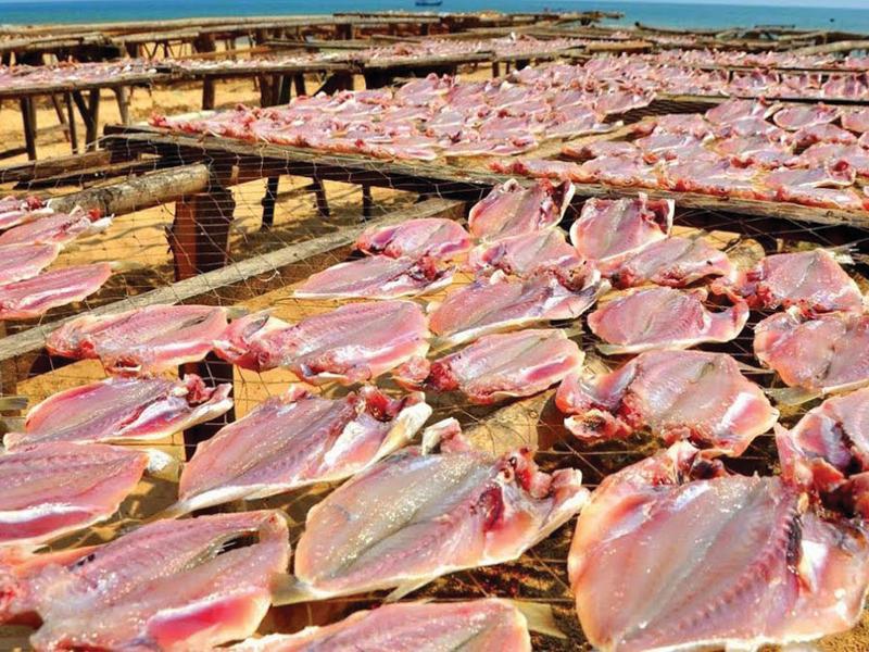 Bảng Giá Các Loại Cá Khô Ngon